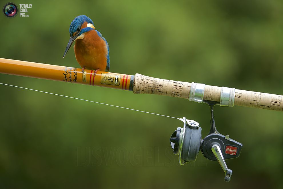 Stunning footage of catching fish by Kingfisher 22