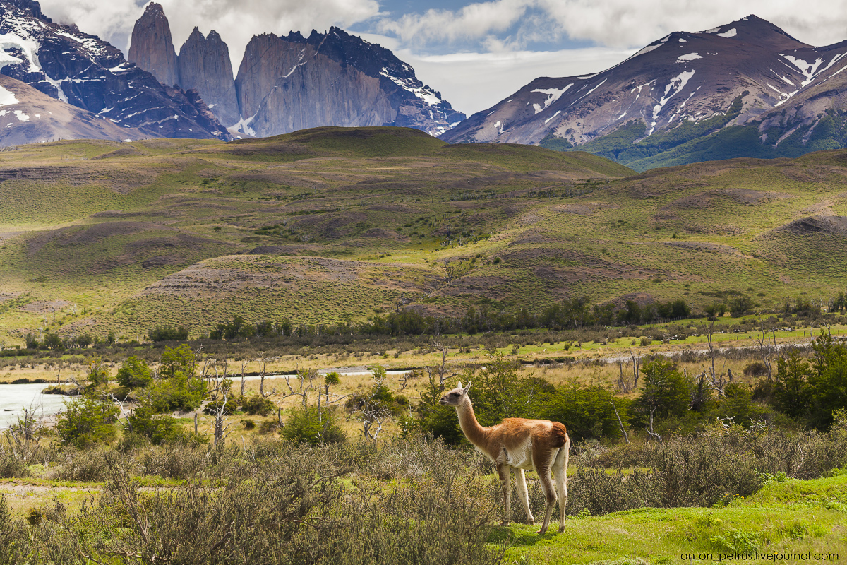 The energy of nature. Torres del Paine 13