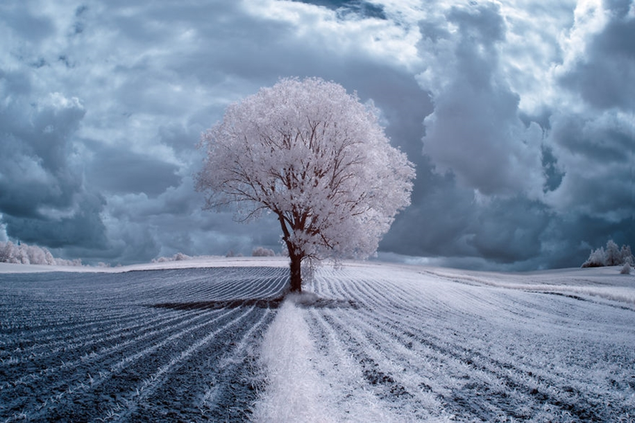 The majestic beauty of trees in infrared photography 01