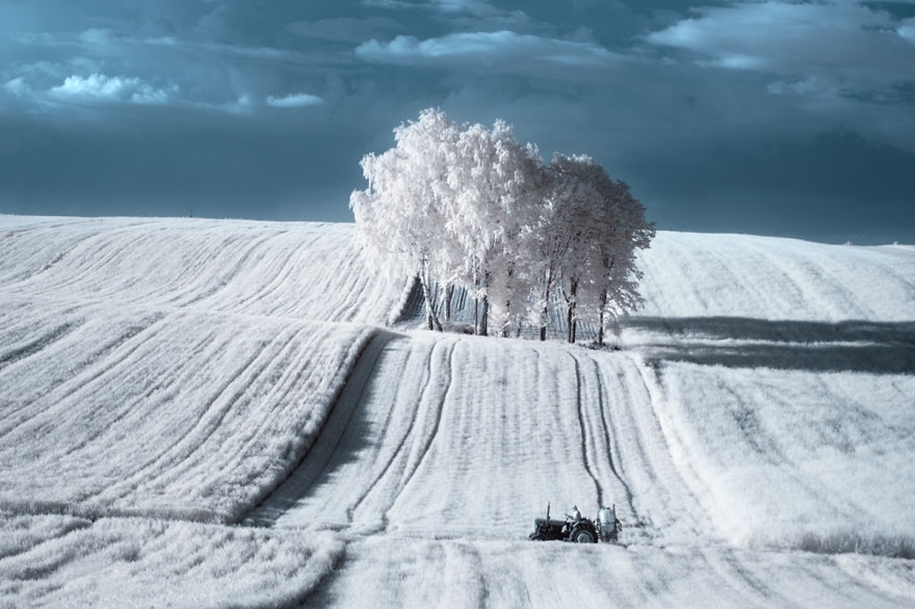 The majestic beauty of trees in infrared photography 02