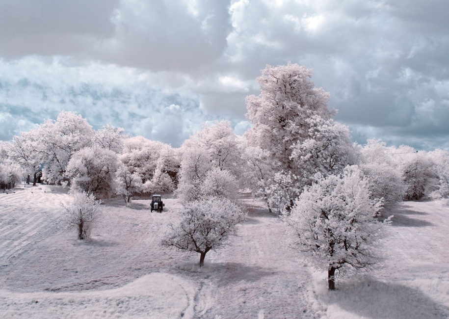 The majestic beauty of trees in infrared photography 03