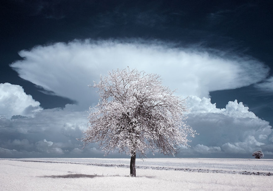 The majestic beauty of trees in infrared photography 04