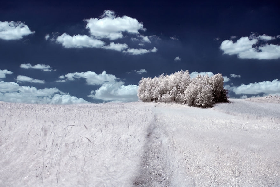 The majestic beauty of trees in infrared photography 06