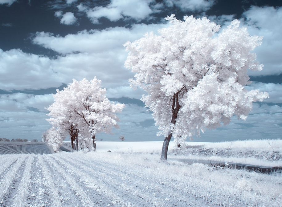 The majestic beauty of trees in infrared photography 07