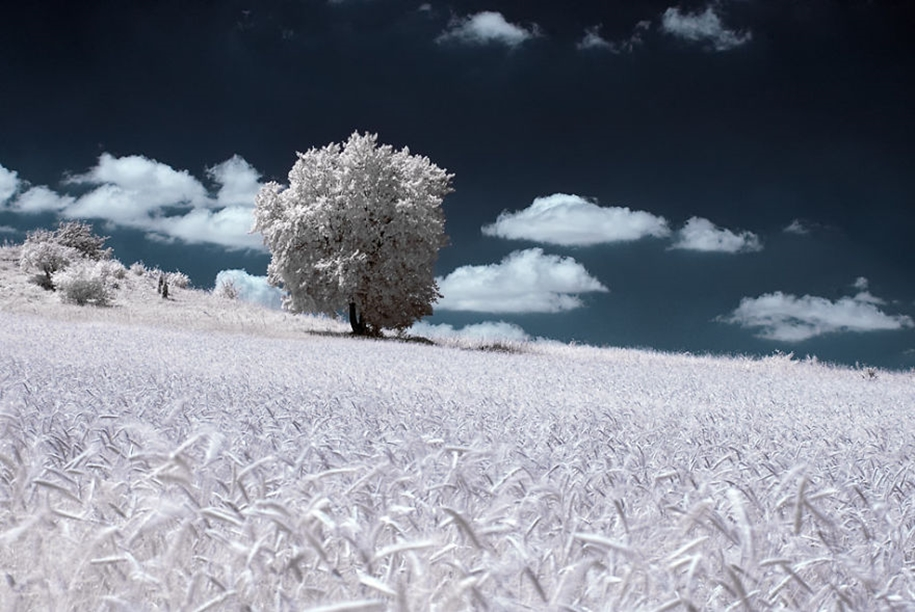 The majestic beauty of trees in infrared photography 08