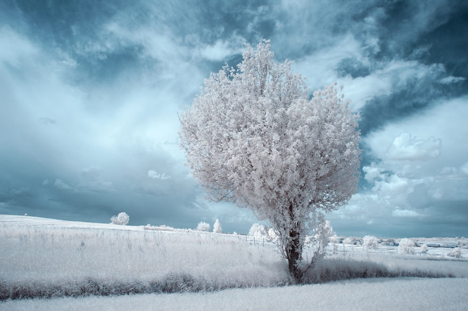 The majestic beauty of trees in infrared photography 09