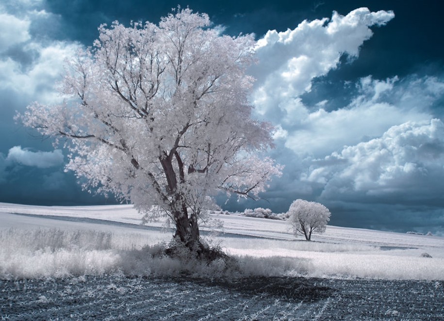 The majestic beauty of trees in infrared photography 11