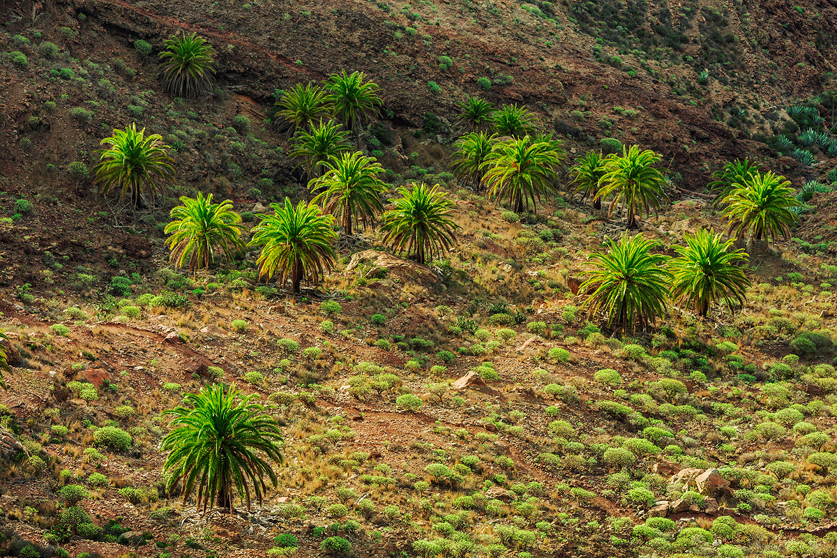 The picturesque Canary Islands, in the lens of Lucas Furlan 08