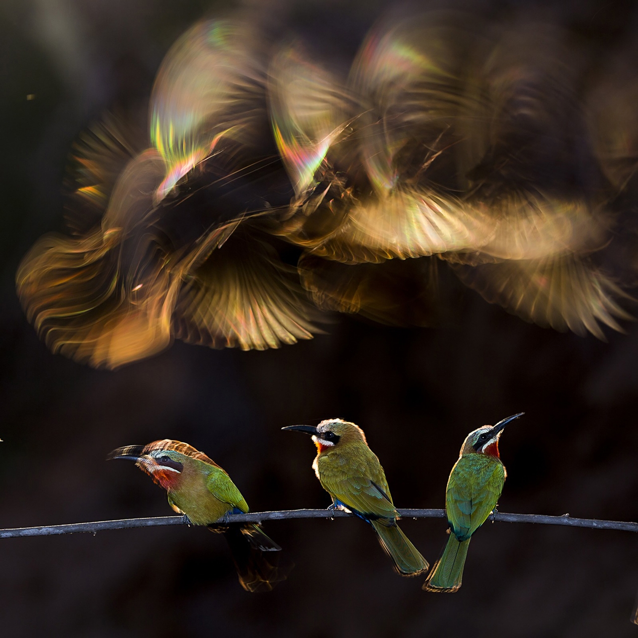The winners of the contest photos National Geographic 2015_05