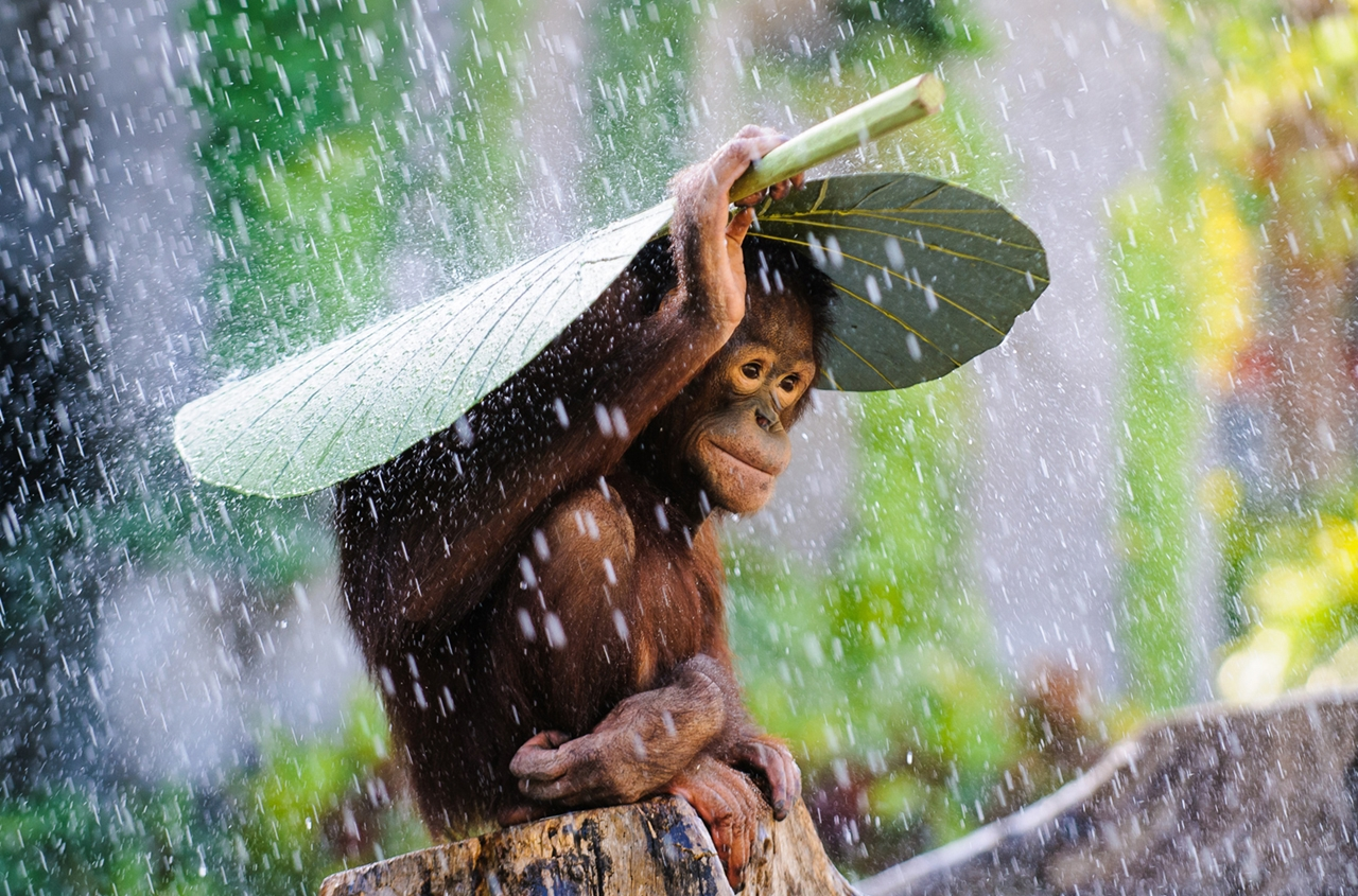 The winners of the contest photos National Geographic 2015_07