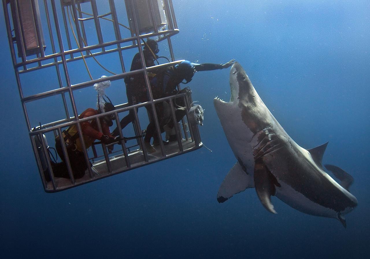 Прикоснуться к акуле