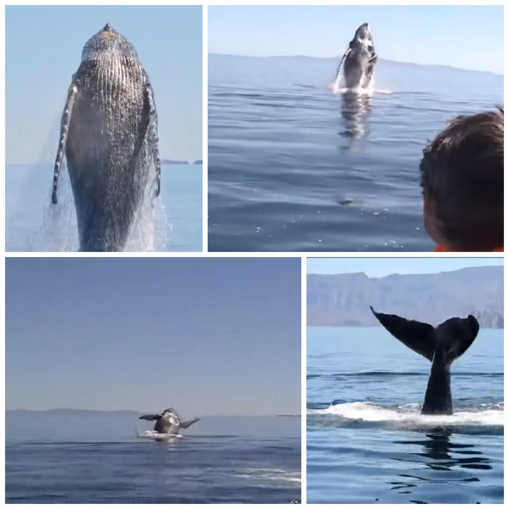 Они помогли запутавшемуся киту и он поблагодарил их в ответ