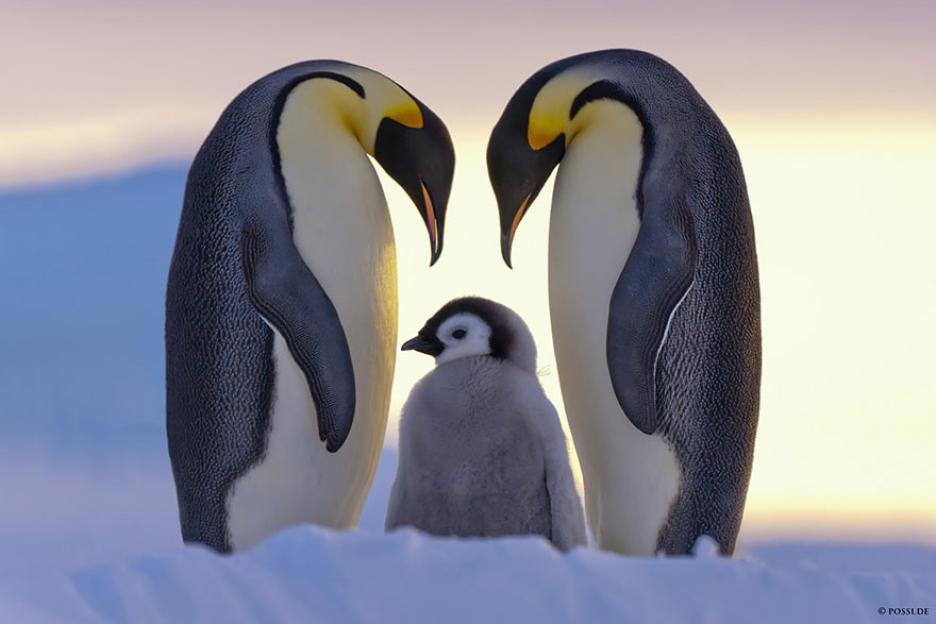 penguin-awareness-day-photography-01