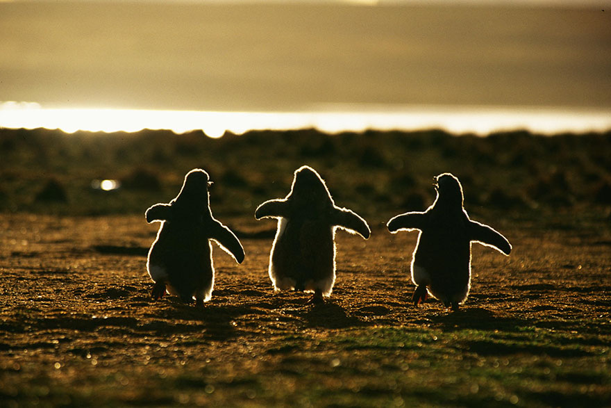 penguin-awareness-day-photography-02