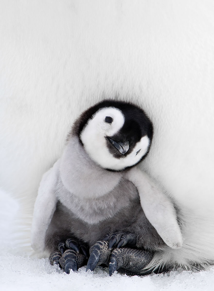 penguin-awareness-day-photography-08