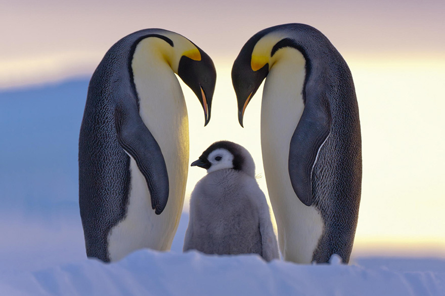 penguin-awareness-day-photography-12