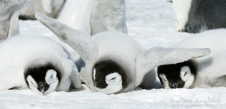 penguin-awareness-day-photography-16