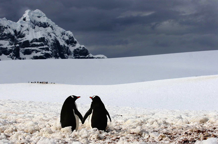 penguin-awareness-day-photography-20