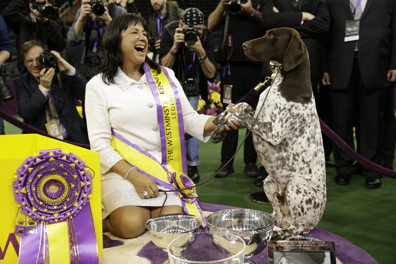 2016 Westminster Kennel Club Dog Show 01