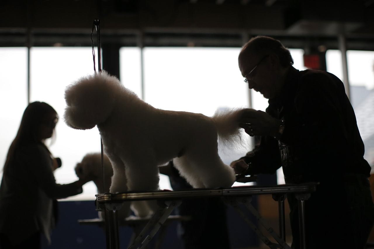 2016 Westminster Kennel Club Dog Show 04