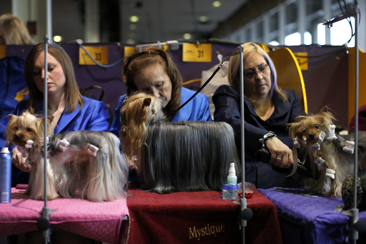 2016 Westminster Kennel Club Dog Show 07