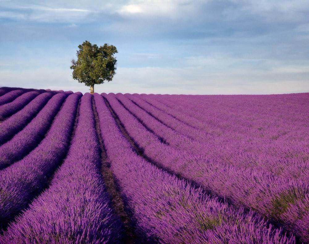 Прекрасные цветочные долины