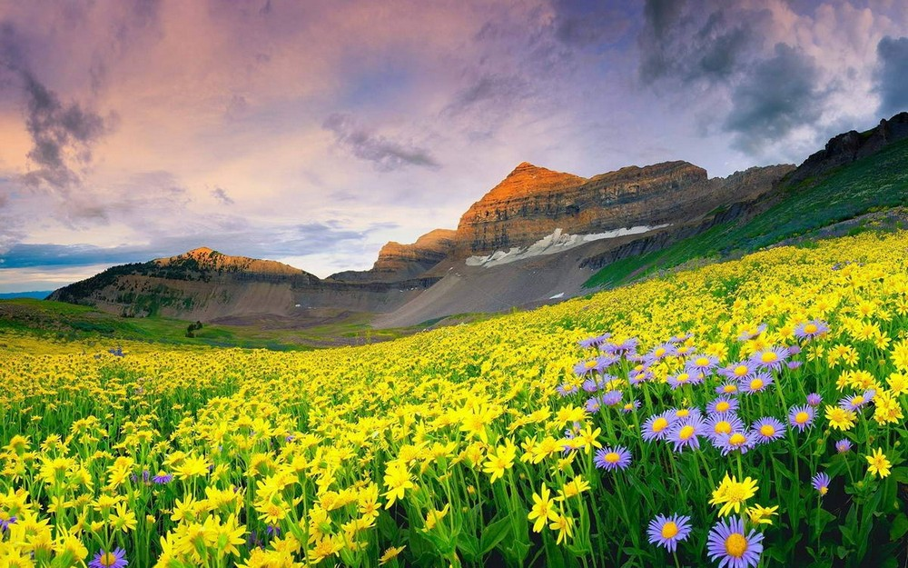 A beautiful flower valley 03