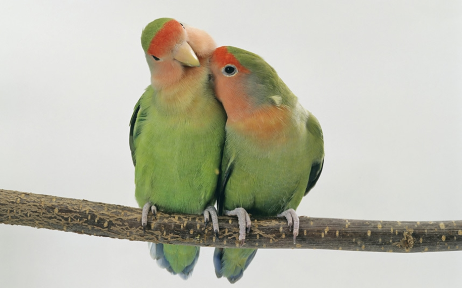 Animal pictures 16