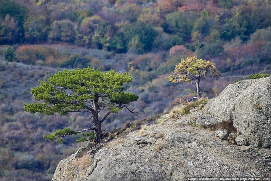 Autumn Demerdzhi 13