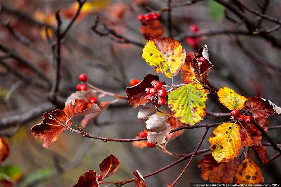 Autumn Demerdzhi 29