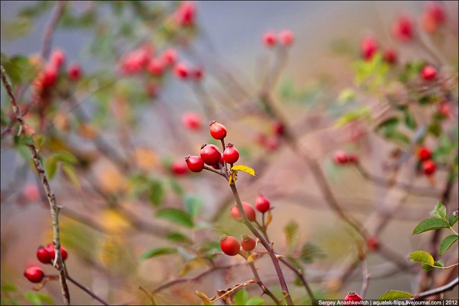 Autumn Demerdzhi 30