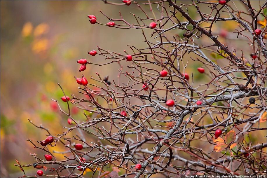 Autumn Demerdzhi 31