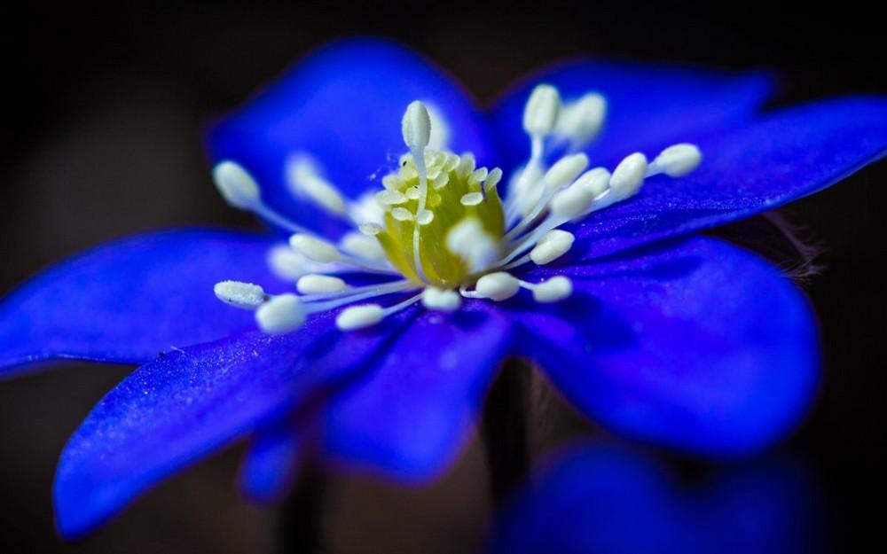 Красивые макрофотографии с насекомыми и цветами