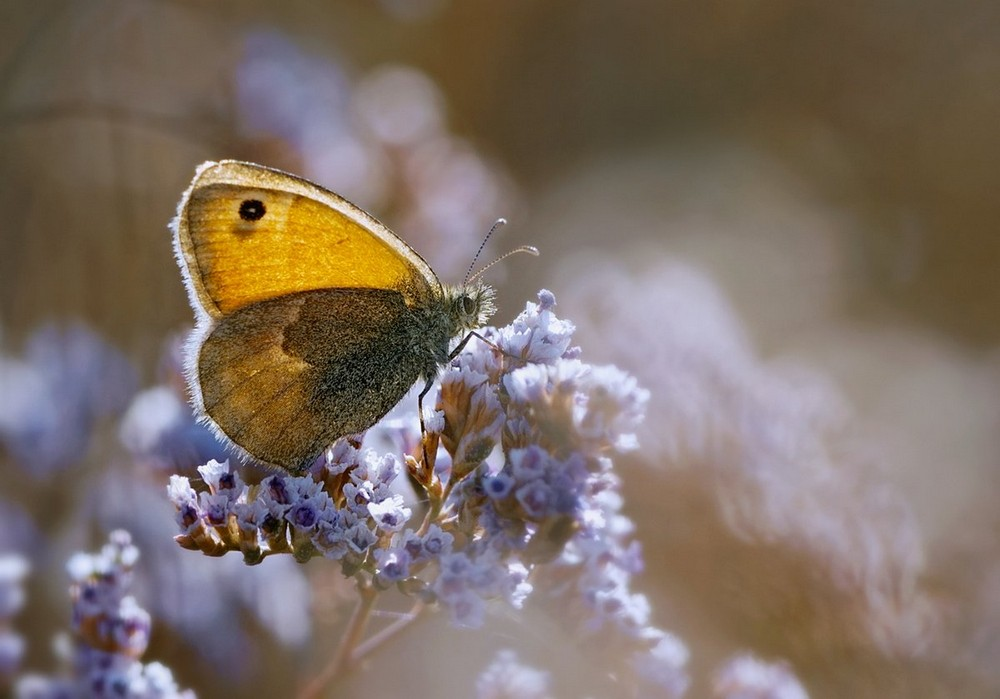 Beautiful macrophotography of insects and flowers 02