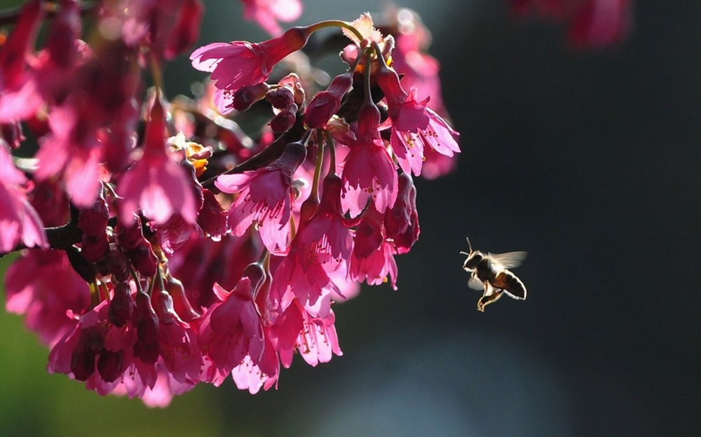 Beautiful macrophotography of insects and flowers 06