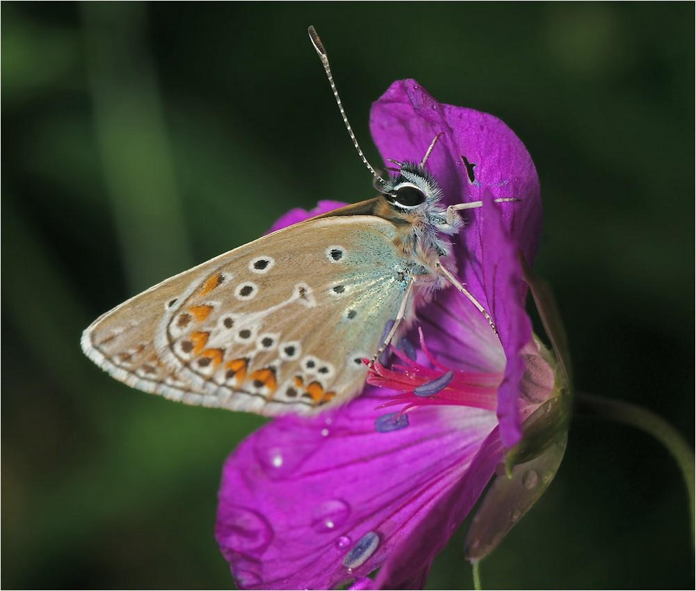 Beautiful macrophotography of insects and flowers 08