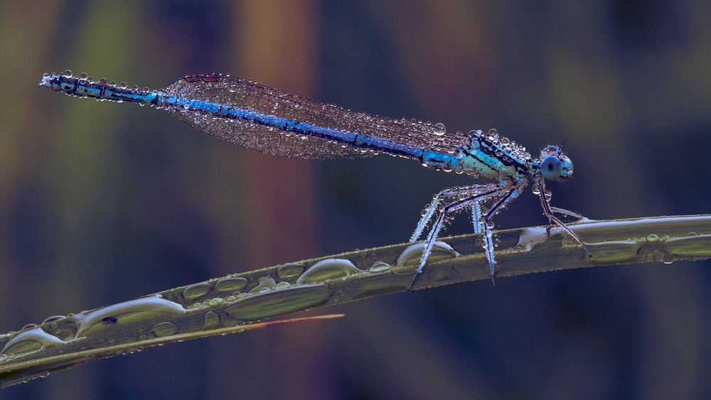 Beautiful macrophotography of insects and flowers 10