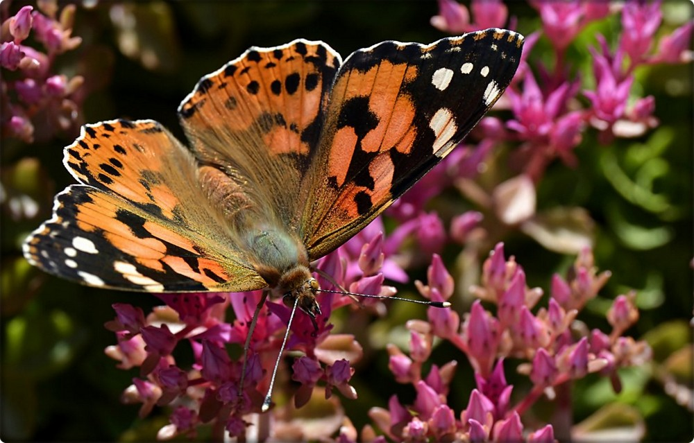 Beautiful macrophotography of insects and flowers 15