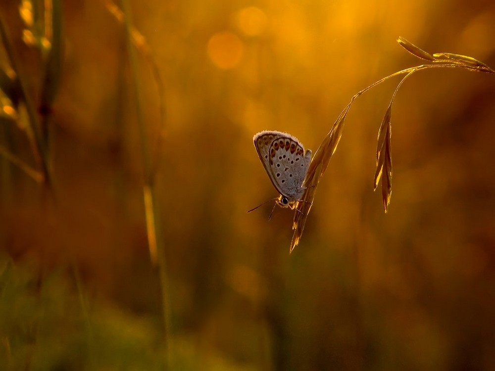 Beautiful macrophotography of insects and flowers 16