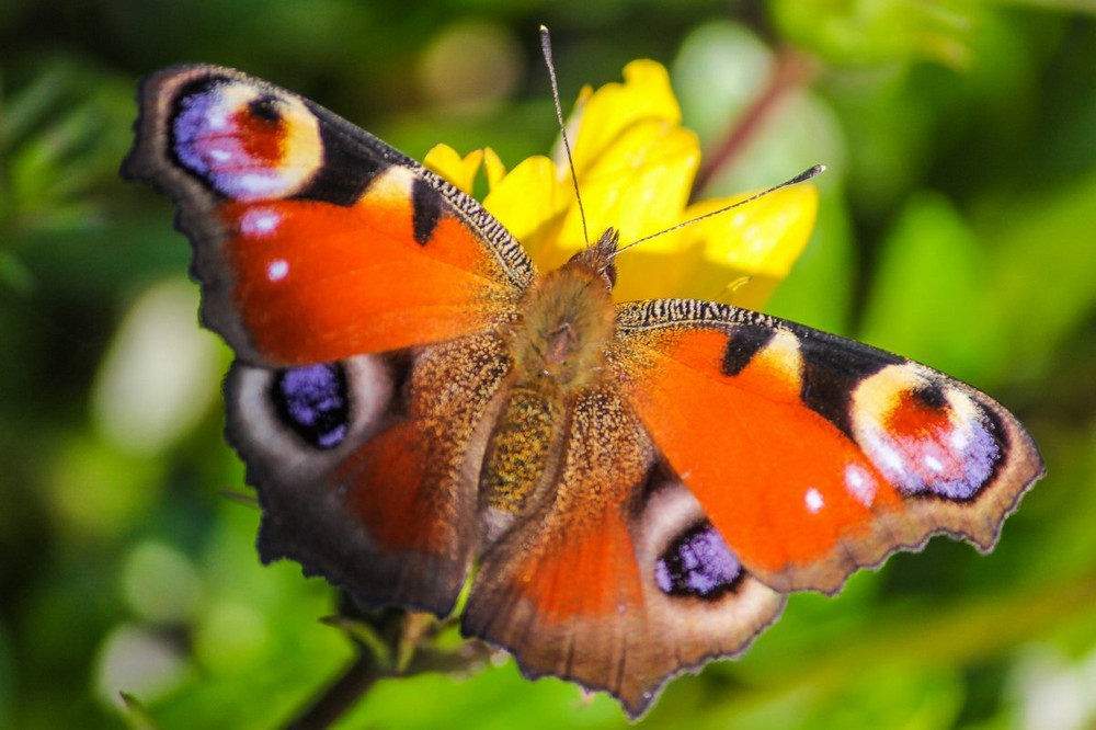 Beautiful macrophotography of insects and flowers 18