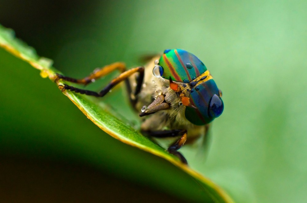 Beautiful macrophotography of insects and flowers 19