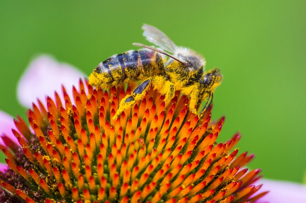 Beautiful macrophotography of insects and flowers 20