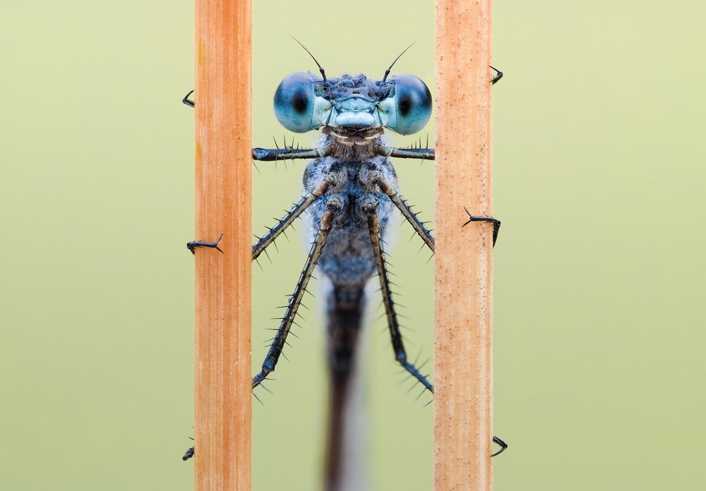 Beautiful macrophotography of insects and flowers 23