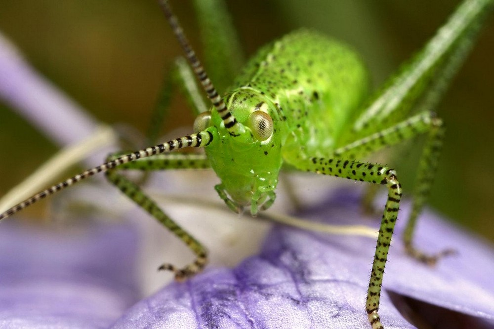 Beautiful macrophotography of insects and flowers 24