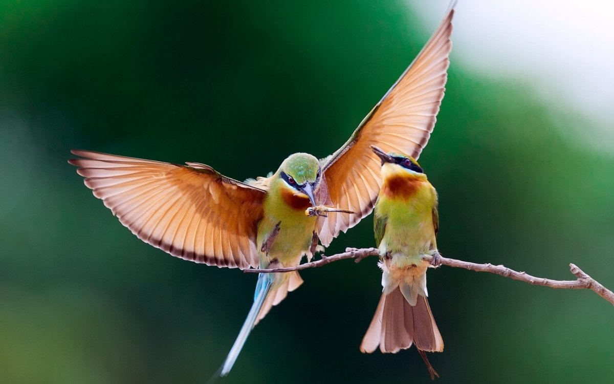 Beautiful photos with birds 04