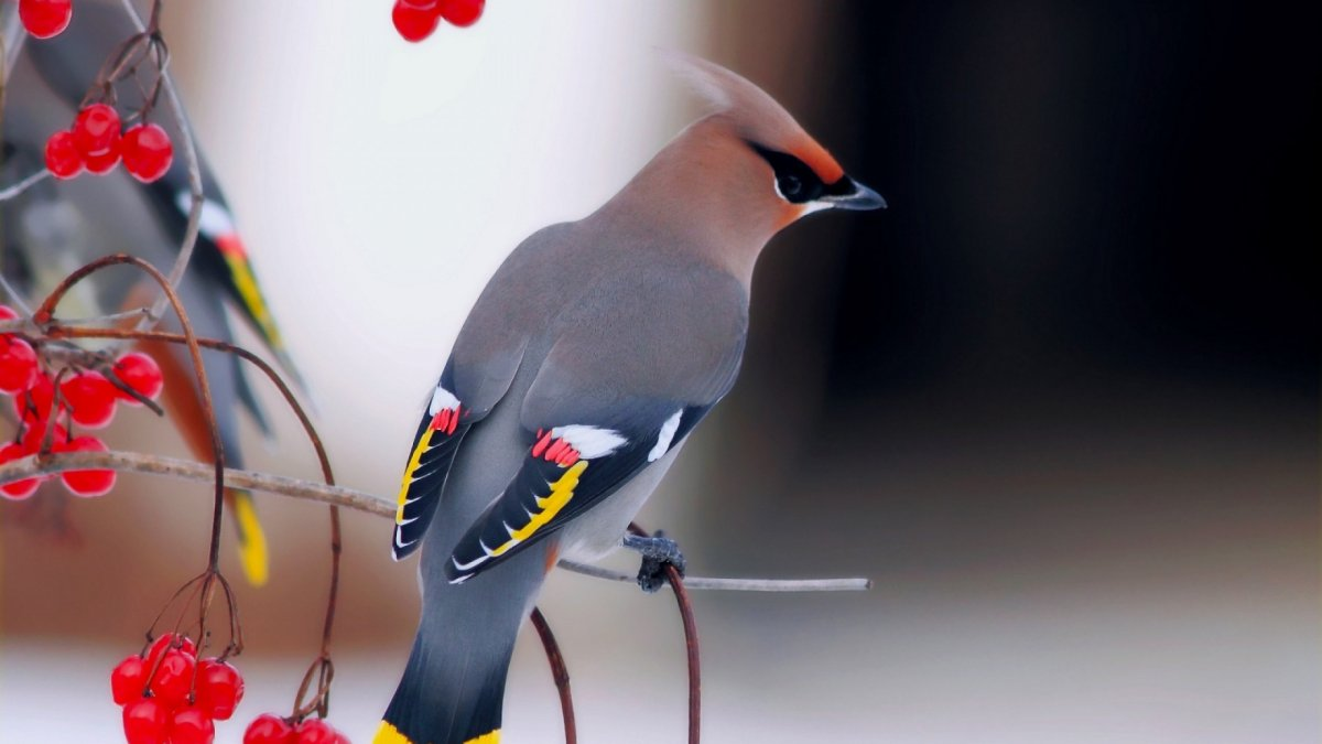 Beautiful photos with birds 11