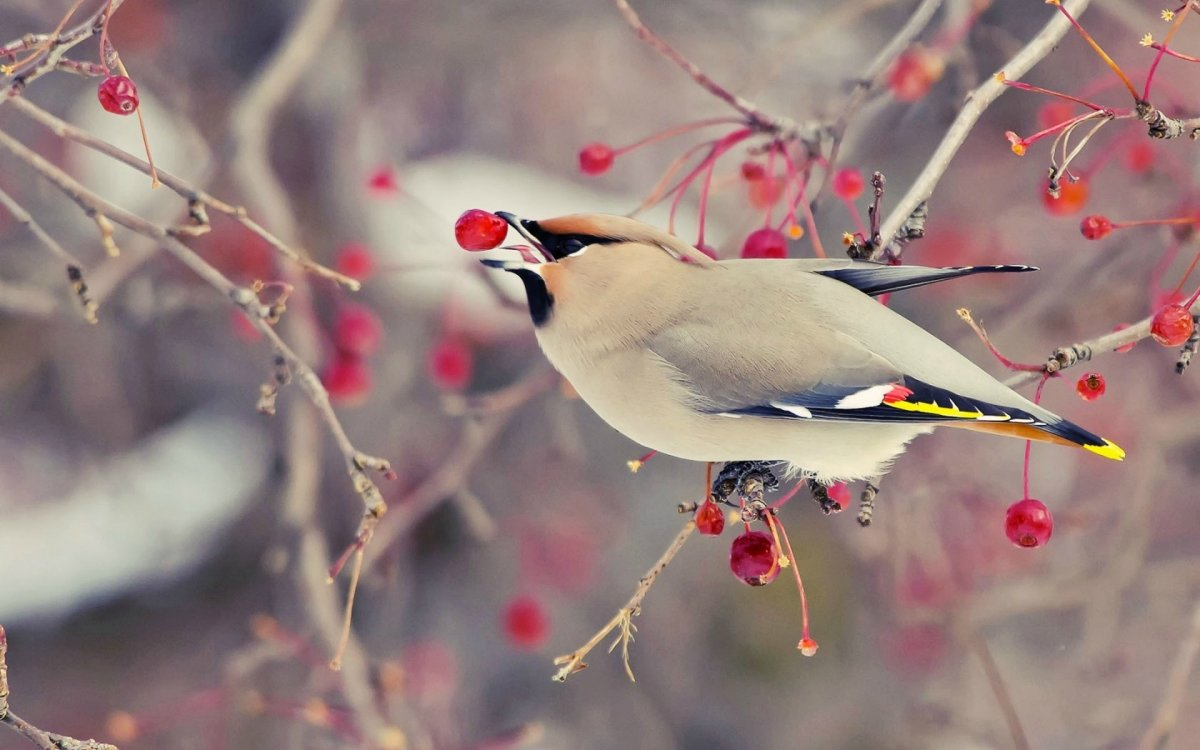 Beautiful photos with birds 19