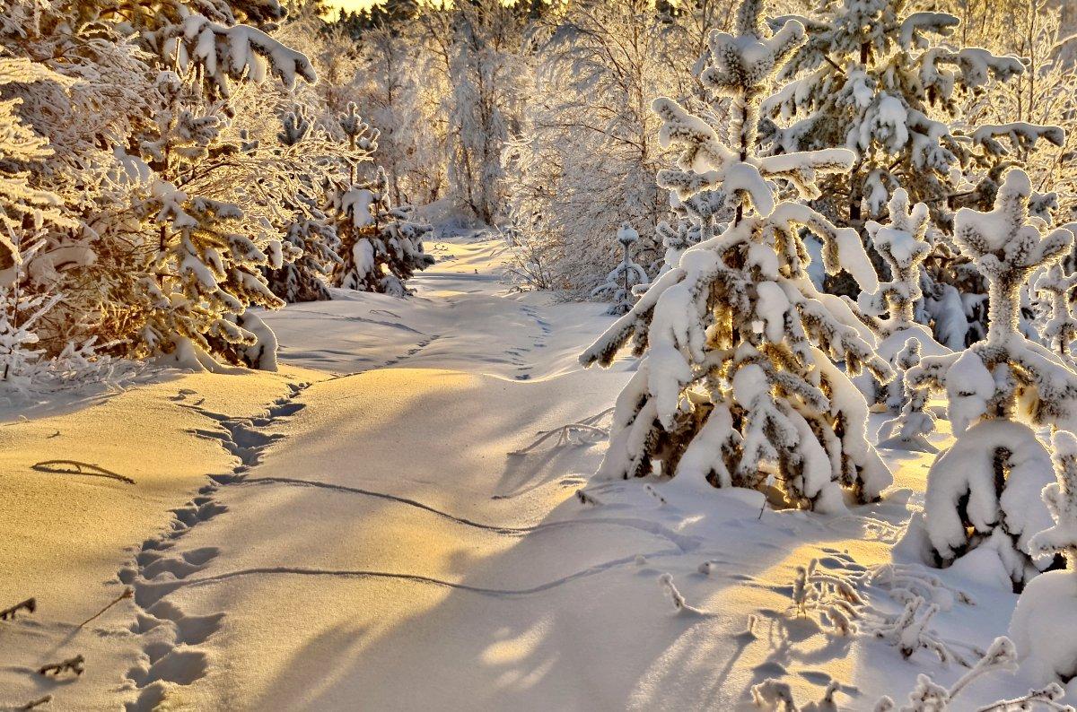 Beautiful winter photos 05