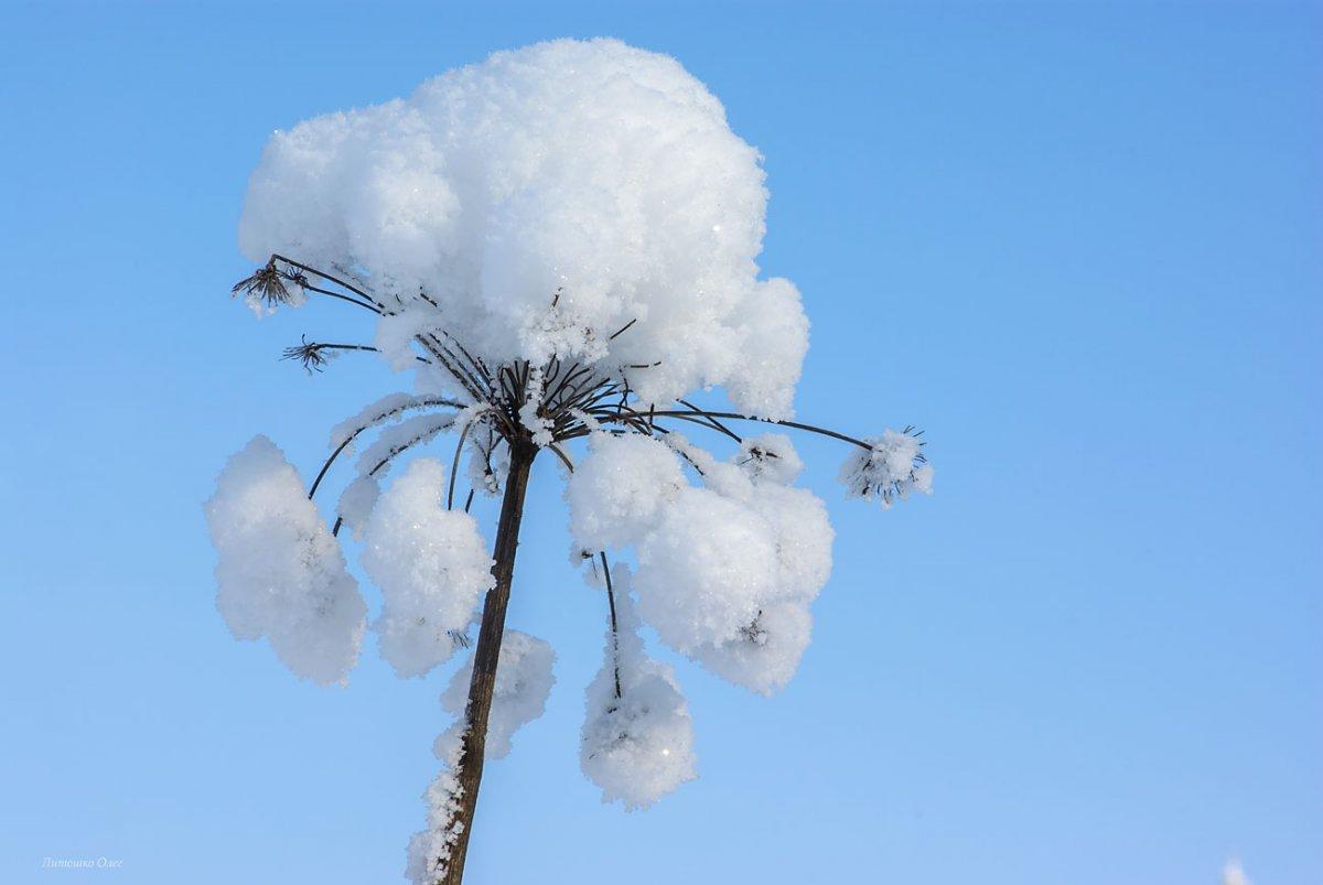 Beautiful winter photos 06