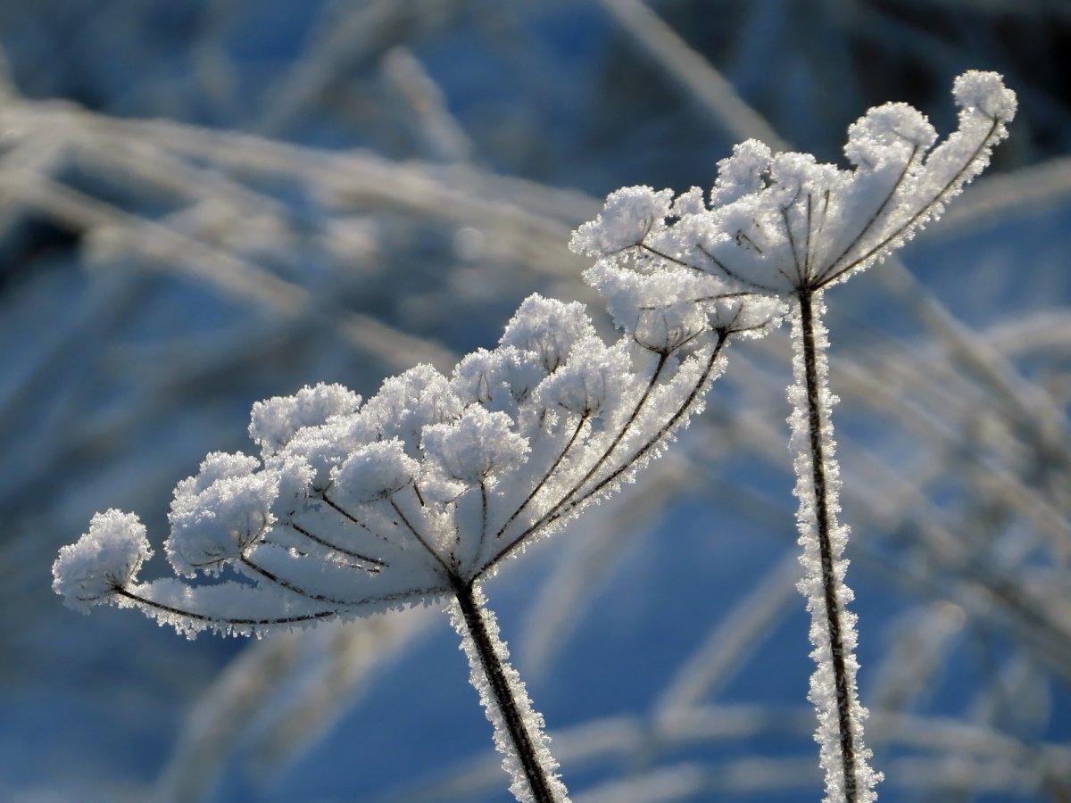 Beautiful winter photos 07